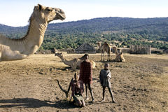Village life Maasai children, introduction dromedary Royalty Free Stock Photography
