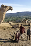 Village life Maasai children, introduction dromedary Royalty Free Stock Photo