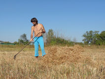 Village life. A man rakes the straw. Farmer in field Royalty Free Stock Photos