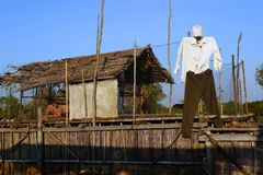 Village lifestyle, Cambodia. Village lifestyle in Kampong Phluk, Cambodia. There is a pig in the floating home. The owner used a clothes to disguise as a real Royalty Free Stock Photos