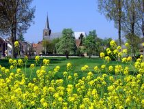 Village in Limburg, Belgium. Small village in Limburg with view on church and yellow autumn-flowers Stock Photography