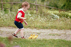 Village. Little boy and ducklings running along the road. Royalty Free Stock Image