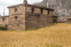 Village made of stones surrounded with wheat. Small village named Ghyaru in the mountains, at Annapurnas range Royalty Free Stock Photography
