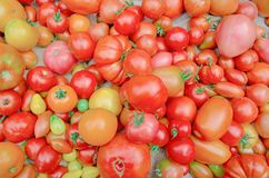 Village market colorful tomatoes. Group of mix tomatoes. Tomato pile for sale at farmers market. Fresh tasty tomatoes. Colorful tomatoes background Tomatoes mix Stock Image