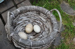 Village market fresh eggs Stock Photography