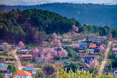 Village on The Mountain. Pink Flowers Field in village on The Mountain Stock Photography