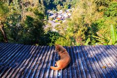 Village in mountains Mae Kampong Chiangmai Thailand. Dog on the roof with blur background of Top view village in mountains Mae Kampong Village Chiangmai Province Stock Photos