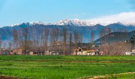 Village in mountains Swat. Village with snow covered mountains in its background in Swat Valley, Pakistan Stock Photos