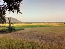Village nature. Village festival in India odisha nabarangpur stock photography
