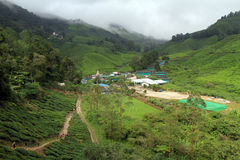 Village nd tea plantation Stock Image