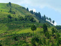The village near Lake Toba Stock Image