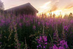 A village in the north of Russia Royalty Free Stock Photography
