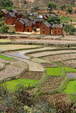The village over the rice fields. The terraced paddy fields of the central highlands of Madagascar are mainly occupied by rice fields, farmed by traditional Royalty Free Stock Images