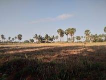 Village palmtrees nature scene stock image