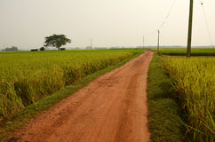 Village Path. A beautiful muddy path into the agricultural field at remote village of WestBengal-India Stock Image