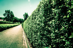 Village path. With hedge on both sides Royalty Free Stock Photo
