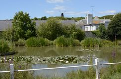Village pond at Rottingdean. Sussex. England Royalty Free Stock Photo