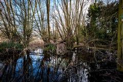 Village pond Royalty Free Stock Image