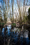 Village pond Royalty Free Stock Photography