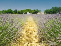 Village in the Provence, France, with lavender in front. During summer 2004 Royalty Free Stock Photos