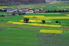 Village in rape fiels. A small village and rape fiels, shoot at Shangri-La,Yunnan,China Royalty Free Stock Images