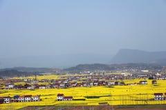 Village of rape flower Stock Images