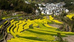 Village of rape flower Royalty Free Stock Photo