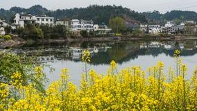 Village of rape flower Stock Photo