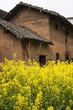 Village of rape flower Royalty Free Stock Image