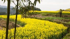 Village of rape flower Royalty Free Stock Images