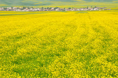 Village in rape seed field Stock Photography