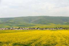 Village in rape seed field Royalty Free Stock Photos