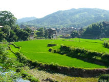 Village in the rice fields and bamboos Royalty Free Stock Photos