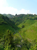 Village in the Rice fields Stock Images