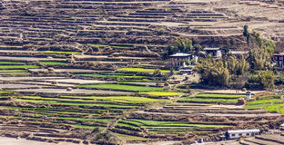 Village with rice terraces Stock Images