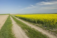 Village road and field. Village long road and field, horizon and clouds on a blue sky stock images