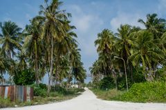 Village road between palm trees at the tropical island. In Maldives royalty free stock images