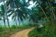Village road in Palode, Kerala. India Stock Photography
