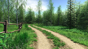 Village road passes forest in summer time Royalty Free Stock Image