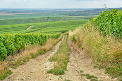 Village road between vineyards Royalty Free Stock Photography