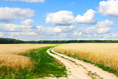 Village road in wheat field Stock Images