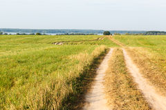 Village road in wheat field Royalty Free Stock Images