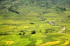 Traditional rice terrace fields in Mu Cang Chai to SAPA region Vietnam. Village of rural farmers with Traditional rice terrace fields in SAPA region, northern royalty free stock image
