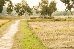 The village`s zigzag road, along the way,. The nature of the paddy fields are beautifully beautiful Stock Photography