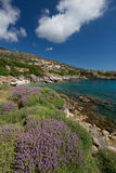 The Village Skala in Kefalonia, Greece. The town Skala in Kefalonia, Greece. At the sea, with wild thyme in the foreground Royalty Free Stock Photography