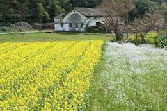 Village of spring Royalty Free Stock Image