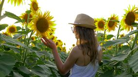 Village summer holidays, girl enjoy countryside beauty on field with sunflowers in the backlight. Village summer holidays, girl enjoy the countryside beauty on stock video footage