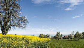 Village surrounded by fields of lucerne Royalty Free Stock Photo