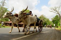 Village transportation of Gujarat, India Stock Photo