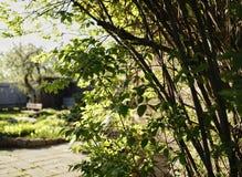 Village tree branch green leaf sunlight garden sky. Tree bush branch green leaf sunlight garden sky Stock Images